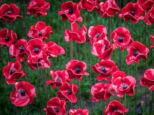 Ceramic-Poppy-Field