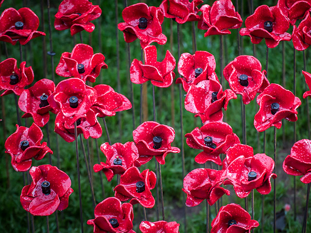 Ceramic-Poppy-Field